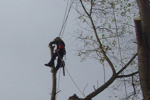 Chainsaw use from rope and harness NPTC308