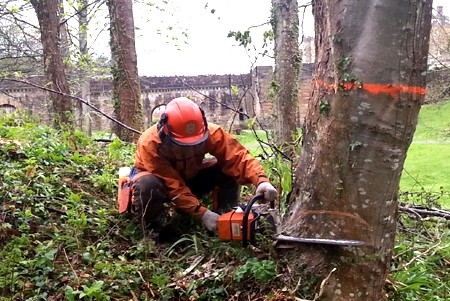FELL & PROCESS TREES OVER 380mm DIAMETER. City & Guilds NPTC 301